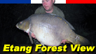 Etang Forest View - Carp Fishing Holidays in France